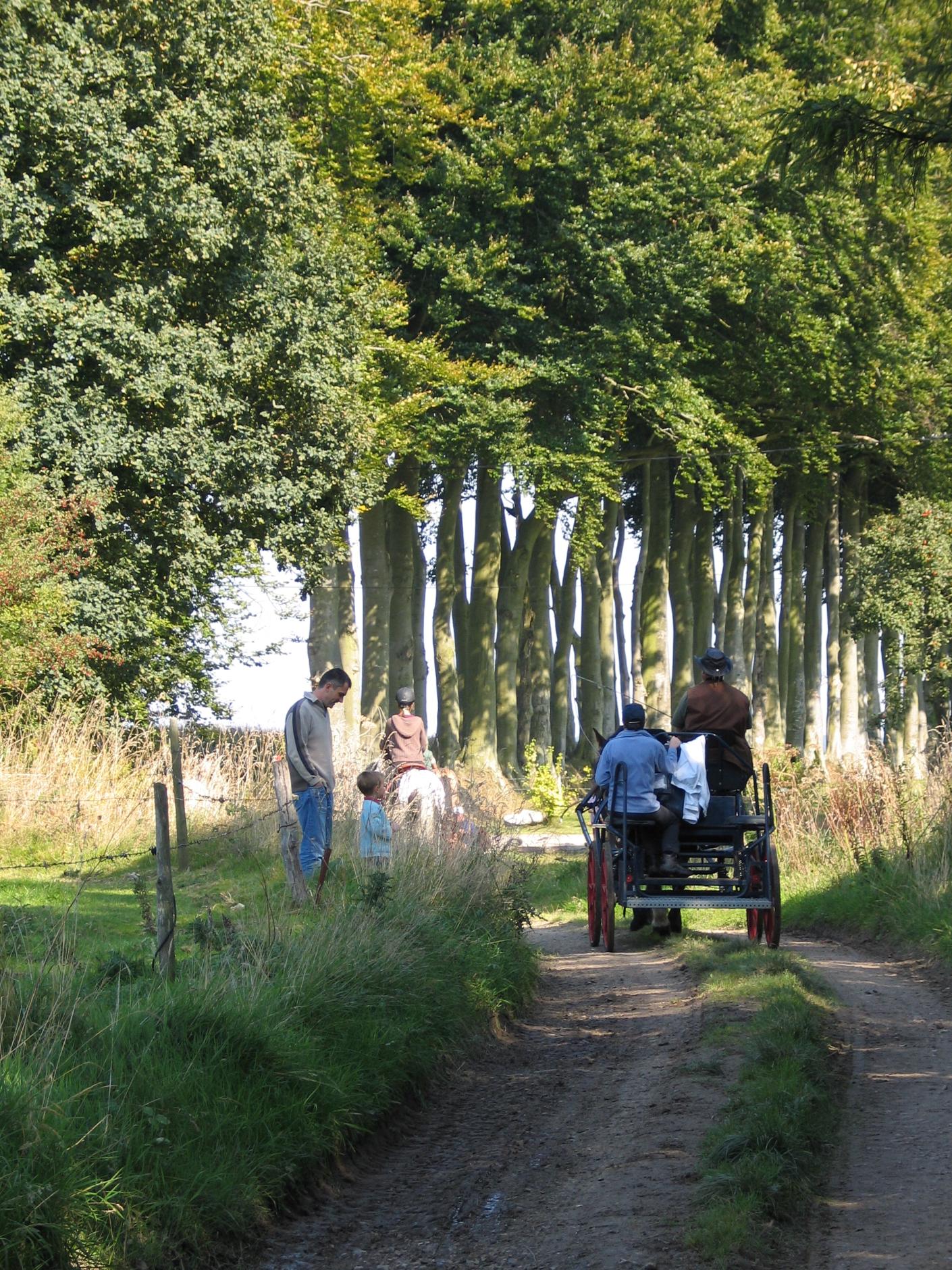 Horseback trek - 'Sur les traces de François 1er'